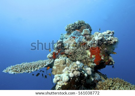 Coral reef / Colourful coral reef with fishes on deep blue background