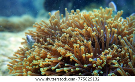 Coral reef. Diving. Underwater life landscape. High resolution