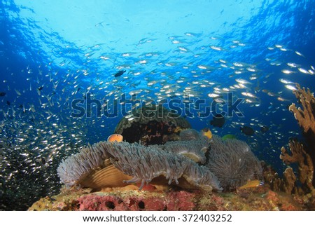 Coral reef fish underwater sea ocean