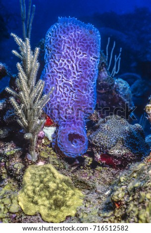 Coral Reef Carbiiean Sea Azure Vase Stock Photo Royalty Free