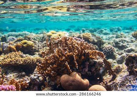 Coral reef in Red Sea,Egypt - stock photo