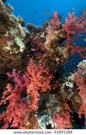 Coral reef in the Red Sea - stock photo