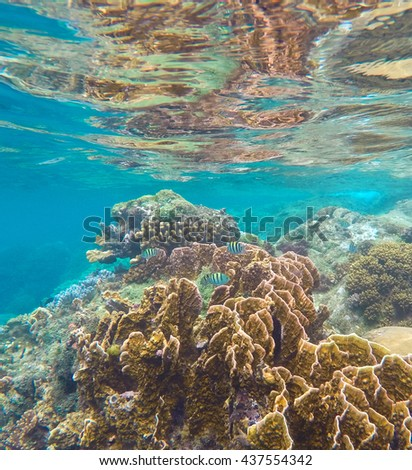 Coral reef in the tropical sea. Yellow and brown coral with coral fishes. Reef and stone from sea bottom reflecting in sea surface during low tide. Tropical nature of the warm ocean in Philippines. - stock photo