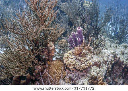 Coral reef pff the coast of Bonaire with fish