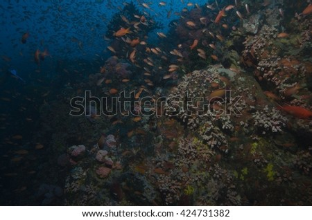 coral reef,  reef fish schooling with sponge