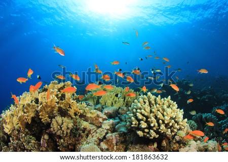 Coral Reef Scene in Sunlight - stock photo