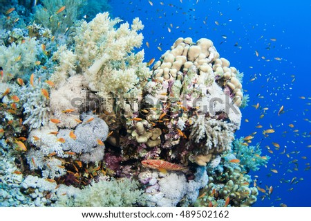 Coral Reef Scene with Tropical Fish in sunlight, Red sea, Egypt