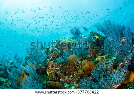 Coral reef scenics of the Sea of Cortez. Cabo Pulmo National Park, Baja California Sur, Mexico.  The world's aquarium.