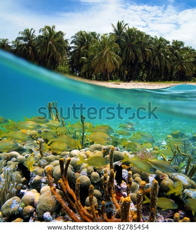 Coral reef sea floor with a shoal of tropical fish and beach with lush coconut palm trees split by waterline, Caribbean, Zapatillas islands, Panama