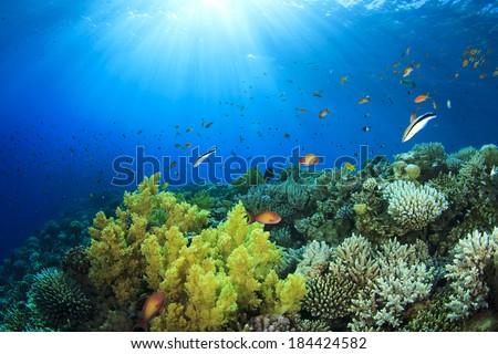 Coral Reef Underwater in Ocean - stock photo