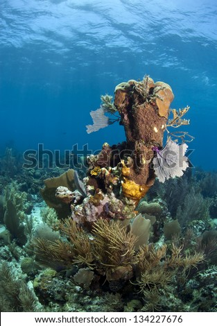 Coral reef underwater off the coast of Roatan Honduras - stock photo