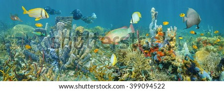 Coral reef underwater panorama with colorful marine life composed by tropical fishes and sea sponges, Caribbean sea - stock photo