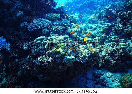 coral reef underwater photo - stock photo