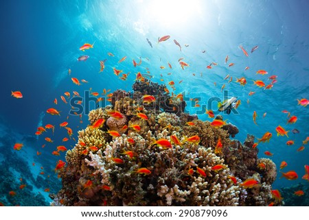 Coral reef with fishes around with clear blue water on the background - stock photo