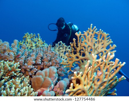 coral reef with girl diver at the bottom of tropical sea - stock photo