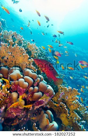 coral reef with red exotic fish cephalopholis at the bottom of tropical sea on blue water background - stock photo