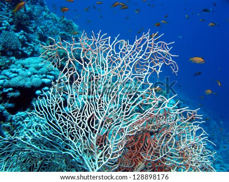 coral reef with sea whip - stock photo