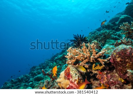 Coral reef with soft and hard corals and exotic fish on bottom of Indian ocean, Maldives. - stock photo