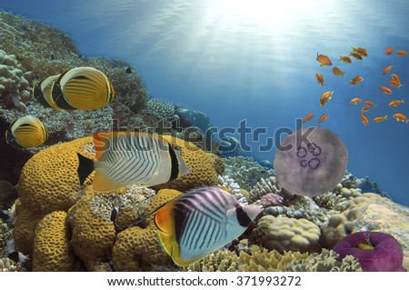 Coral reef with soft and hard corals with exotic fishes - stock photo
