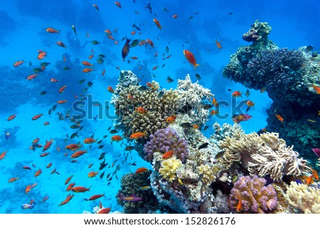 coral reef with soft and hard corals with exotic fishes anthias on the bottom of tropical sea  on blue water background - stock photo