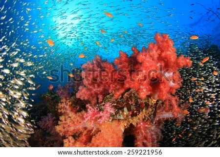 Coral Reef with swarms of Glassfish (Golden Sweeper fish) - stock photo