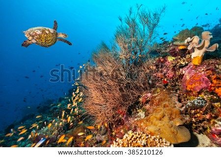 Coral reef with turtle - stock photo
