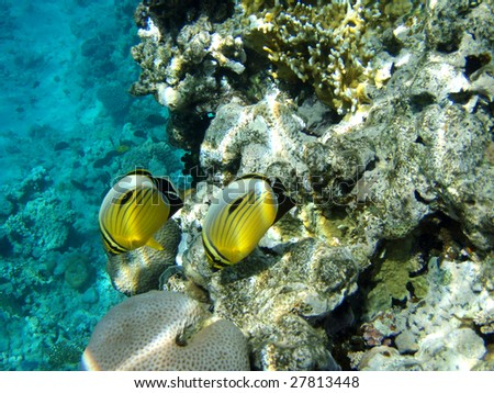 Coral small fishes - stock photo
