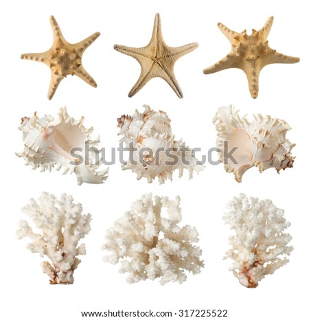 Coral, starfish, sea shell. isolated - stock photo