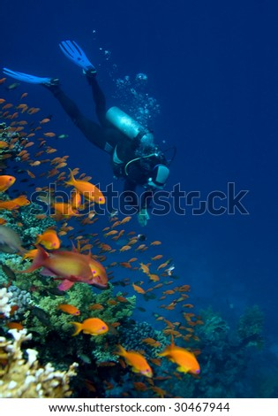 Corals, fishes and diver - stock photo