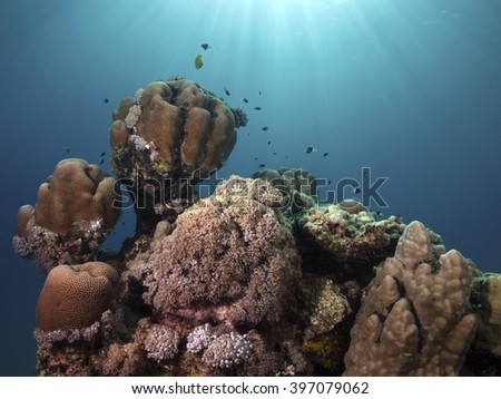 Corals in the back light - stock photo