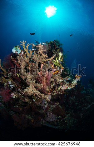 Corals on the Liberty wreck, Tulamben, Bali - stock photo