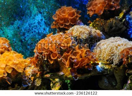 Corals reef - stock photo