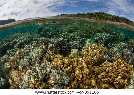 Corals thrive in shallow water along the edge of Nusa Laut near Ambon, Indonesia. This tropical region harbors extraordinary marine biodiversity and excellent diving and snorkeling.
