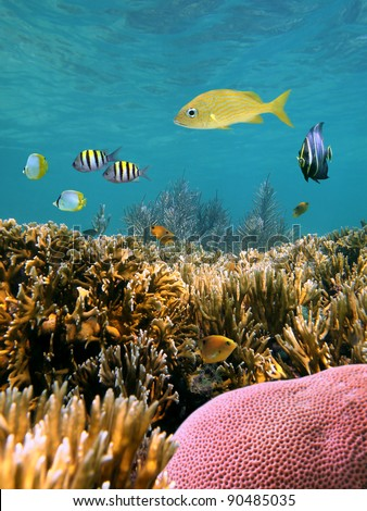 Corals underwater with tropical fish in the Caribbean sea, Mexico - stock photo