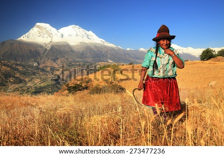 CORDILIERA NEGRA, PERU - AUGUST 23: Peruvian peasant woman harvesting the wheat, Peru, South America, August 23, 2012 - stock photo