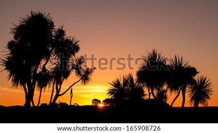 Cordyline australis, commonly known as the cabbage tree at sunset. - stock photo