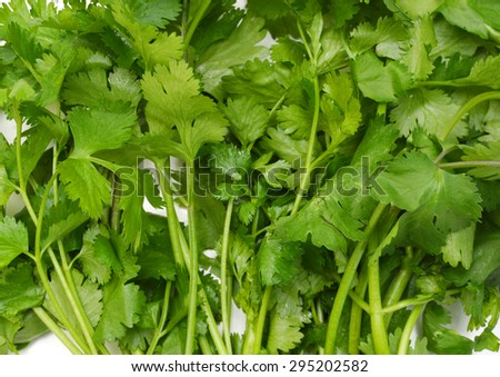 coriander cilantro leaves isolated on background