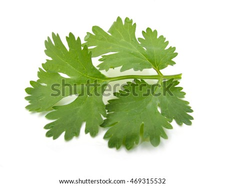 Coriander cilantro leaves isolated on white