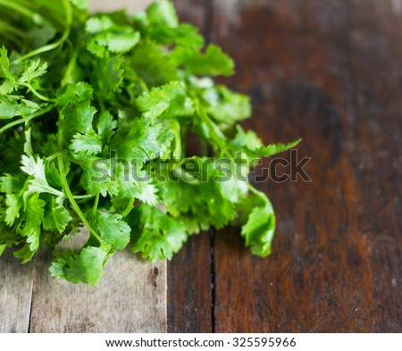 how to grow coriander leaves