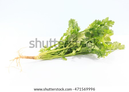 Coriander is a vegetable, spice and has many benefits.(on white background )