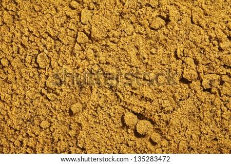 coriander powder - stock photo