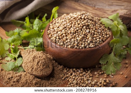 Coriander seeds, fresh coriander and powdered coriander - stock photo
