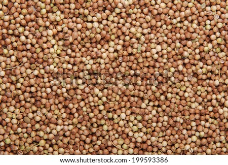 Coriander seeds overhead view for background or texture - stock photo