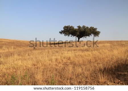 Cork tree in Alentejo plain, Portugal - stock photo