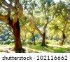 cork tree in Spain, Algeciras, Nature Park Los alcornocales - stock photo