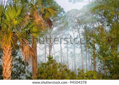 Corkscrew Swamp Sanctuary, Florida - stock photo