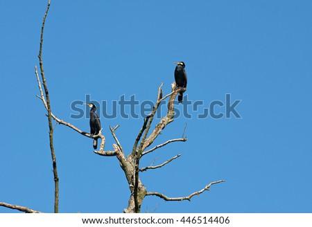 cormorant in dry tree on sky background - stock photo