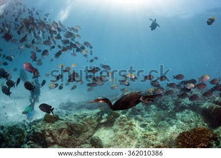 cormorant while fishing underwater in bait ball in the deep blue sea - stock photo