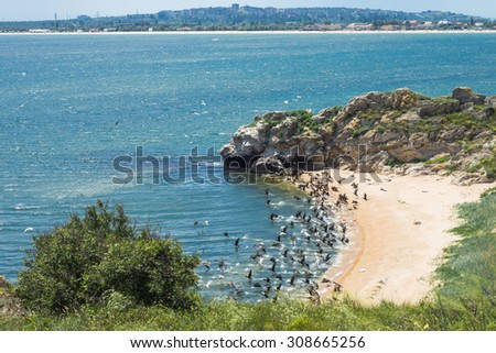 Cormorants and gulls are taking  off from the wild cove in reserve Kazantip against the background of Shcholkino town. Crimea, the sea of Azov.  - stock photo