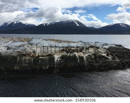 Cormorants on an island in the Beagle Channel in Argentina - stock photo